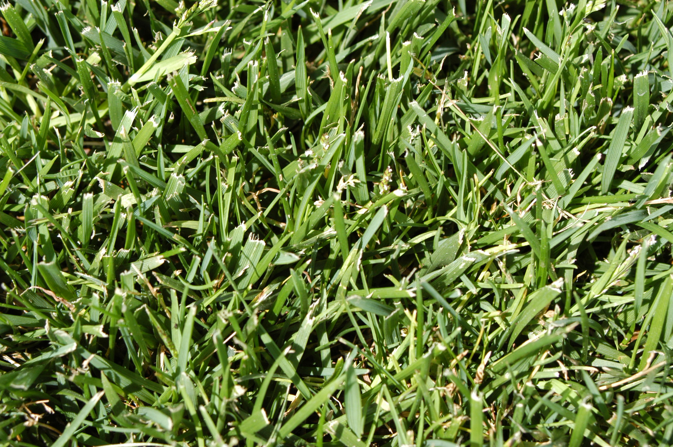 My Holiday Lawn Report Wisconsin PDF Thumbnail