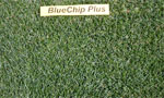 BlueChip Plus Image