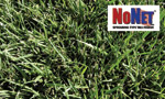 NoNet® Spreading Tall Fescue Image